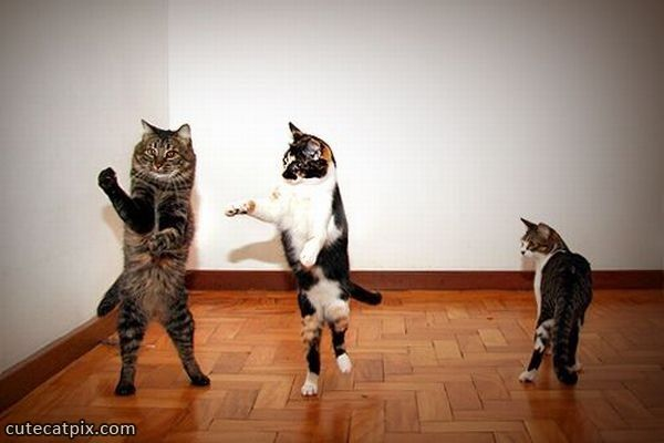 cute dancing cats