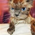 Cutecatpictures-angry Wet Cat