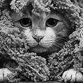 camo Cat | Cute Cat Pictures