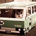 taking The Bus | Cute Cat Pictures
